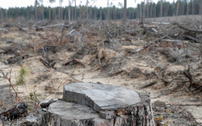COVID-19 is putting the world's forests at risk – here's how