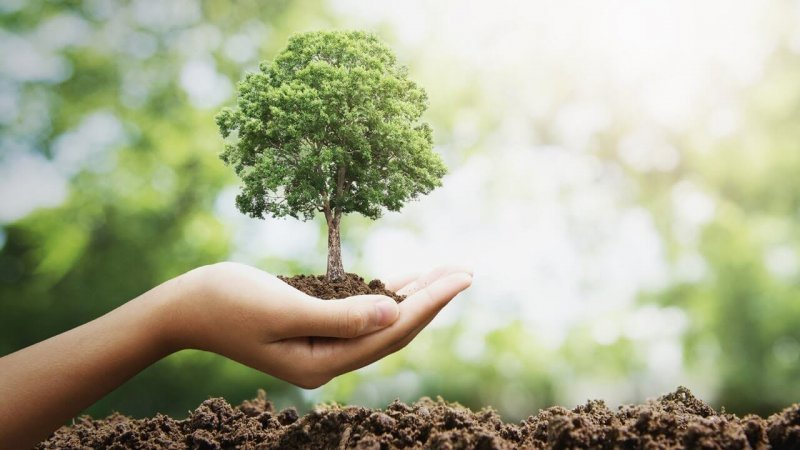 Restoration of forests could create $230 billion in business opportunities